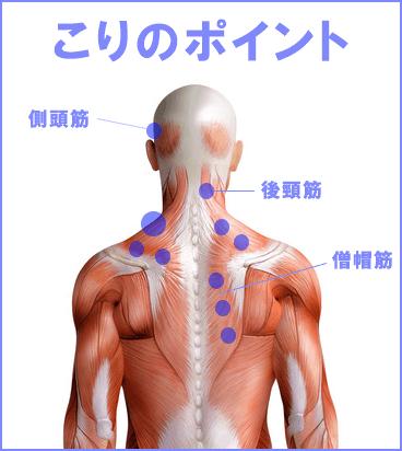 こりのポイント 僧帽筋 後頸筋 側頭筋